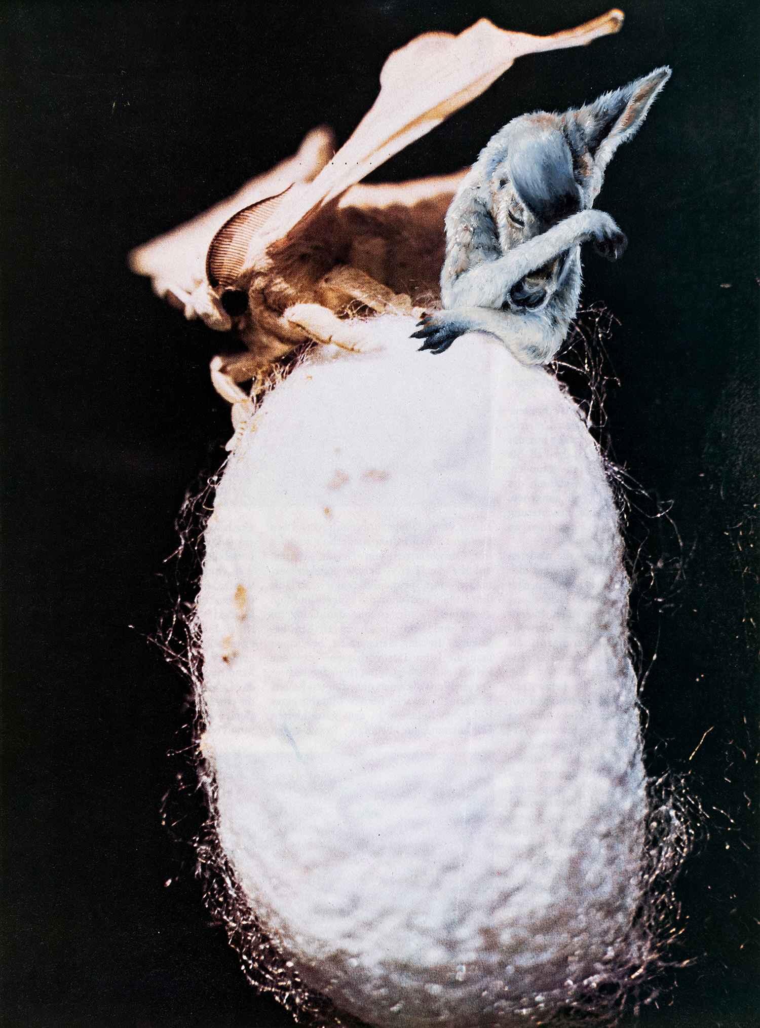 o.T. 2017, 29,4 x 21,7 cm, Öl auf Nessel